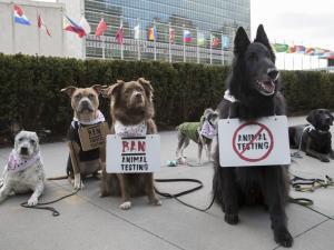 New york des chiens manifestent contre experimentation animale width1024